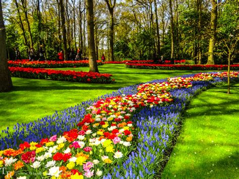 Netherland Flower Garden Keukenhof Flower Garden Near Lisse Netherlands Stock Photo Model 60 Chsbahrain