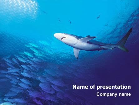 shark powerpoint template aquatic life powerpoint