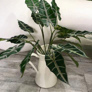 top rare indoor plants  perth collectors