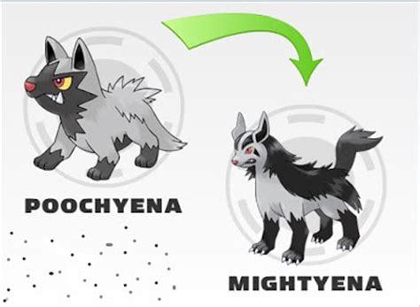 rede pokemon: evolution do poochyena
