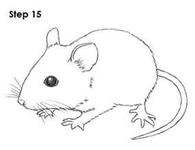 mouse drawing www imgarcade image arcade