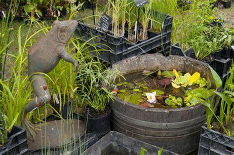 comment cr 233 er un jardin d eau ou jardin aquatique