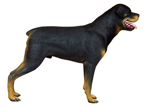 rottweiler statues rottweiler standing statue size resin statue prop display quot free shippin ebay