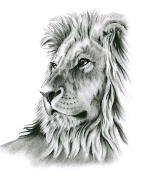 lion drawings www pixshark com images galleries with a
