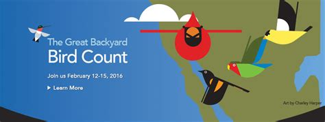 Great Backyard Bird Count 2016 The Metropolitan Field Guide 365 Nature Day 44 The