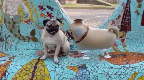 doug the pug teddy 306 best images about pug on