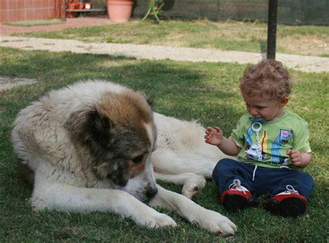 cani ideali per appartamento quando il veterinario sconsiglia certe razze di cani da