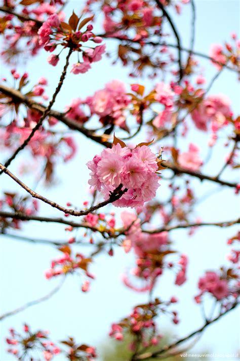 fiori thailandesi riso cantonese e fiori a thai pianist