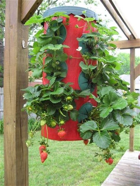 Topsy Turvy Strawberry Planter Reviews by Topsy Turvy Strawberry Planter