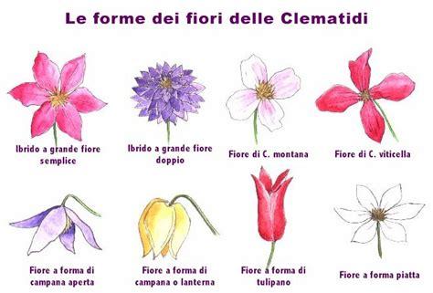 specie di fiori untitled document digilander libero it