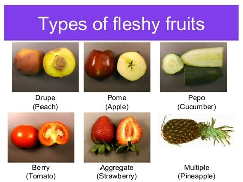 5 fruits for pooja seeds fruits by pooja