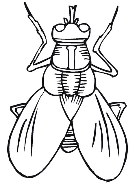 water bug coloring page bug insect coloring pages primarygames com