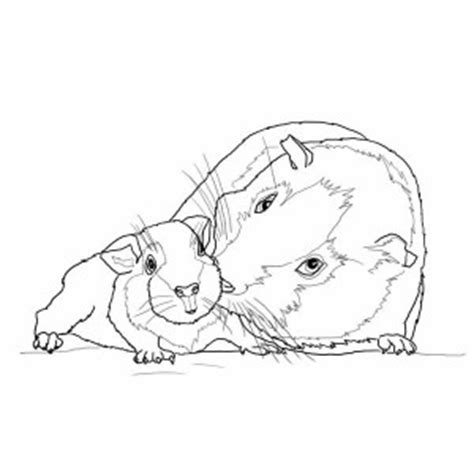 Free Coloring Pages Of Guinea Pig Worksheets Guinea Pig Coloring