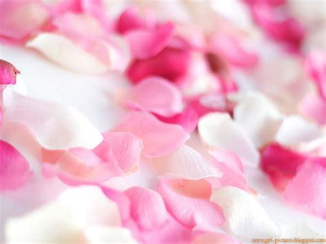 hd wallpapers rose petals