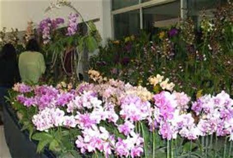 kumpulan budidaya budidaya bunga anggrek