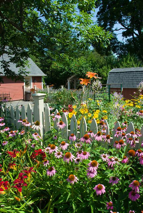 Backyard Gardens by Perennial Flower Garden In Summer Backyard Plant Flower Stock Photography