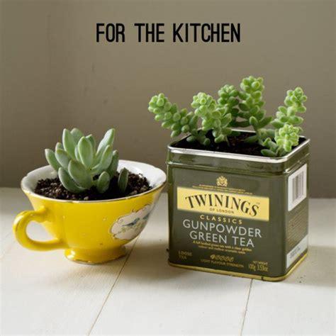Pot Pour Plante Aromatique Interieur