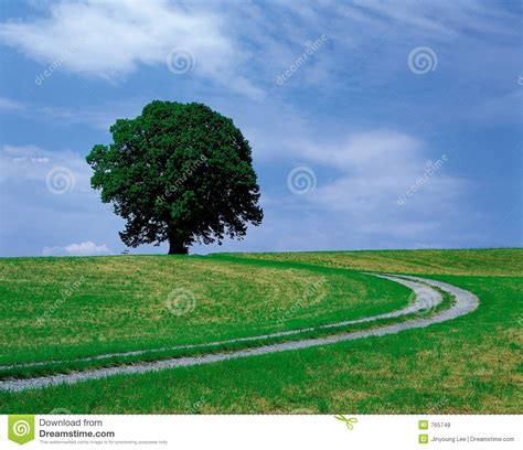 scenery  nature stock photo image  view shadow path
