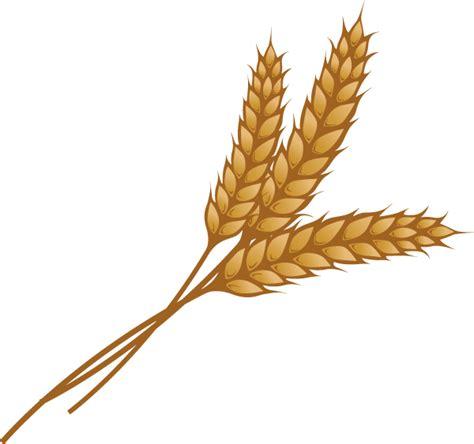 wheat clip wheat clipart wheat stalk pencil and in color wheat
