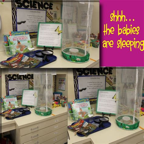 the decorating centre 1000 images about eyfs science and discovery on
