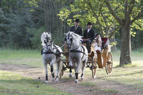 cavalli con carrozza noleggio carrozza matrimonio con cavalli toscana grosseto