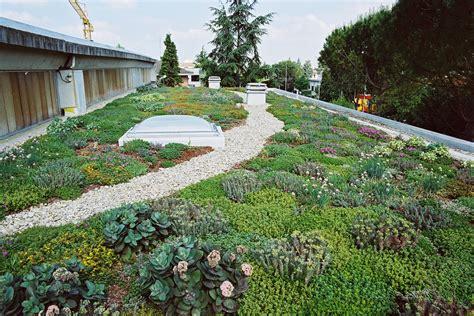 tetti giardino tetti verdi 10 piante per il tuo giardino pensile casa