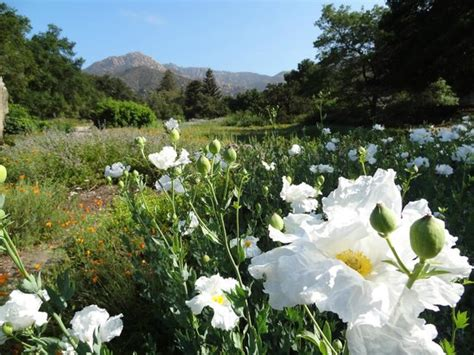 Santa Barbara Botanical Garden Popular Attractions In Santa Barbara Tripadvisor