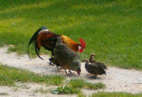 animali da cortile elenco fattorie didattiche e altri eventi in val di non per