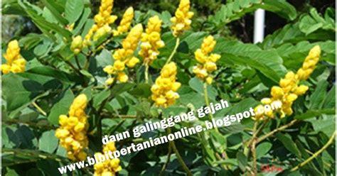 membuat zpt alami jual benih cabai rawit unggulan pestisida organik