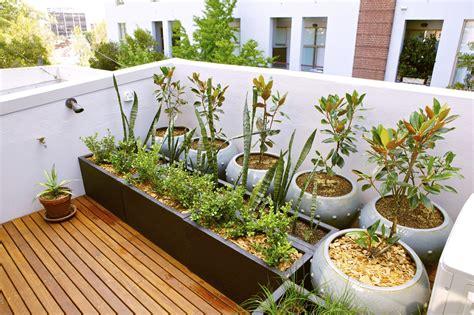 rooftop gardening  city dwellers gardening