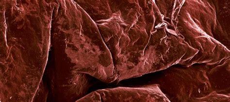 food   microscope  pics izismilecom