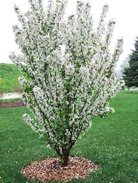 422 best images about trees and bushes on pinterest plants garden plants and gardening