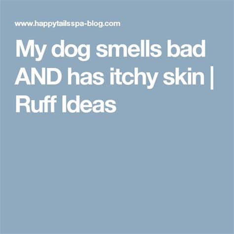 my house smells like dog pee 1000 ideas about dog smells on pinterest dry dog shoo stinky dog and dog shoo