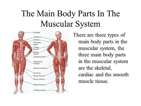 what are the two main sections of an html document parts of the muscular system hardcore sex pictuers