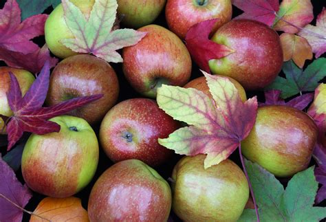 apple varieties 5 apple varieties that are just as delicious as and less