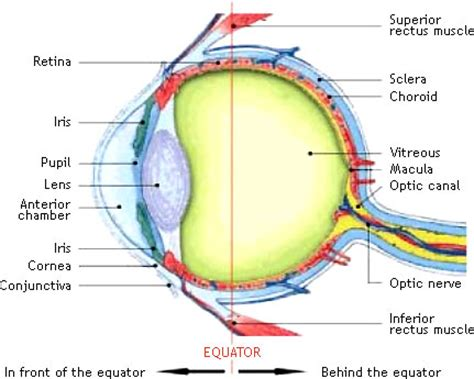 the eye is the l of the r 233 tinostop treatments