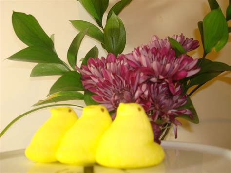 fresh cut flower preservative fresh cut flower preservative 6 steps