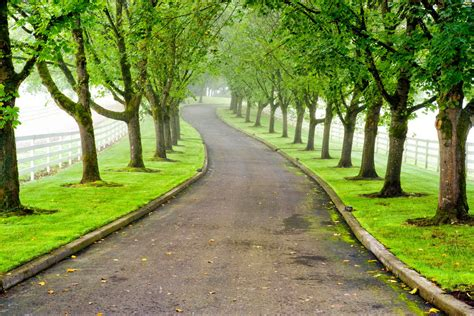 a list of ornamental trees for landscaping with beautiful