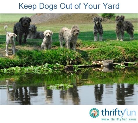 how to keep dog in yard 78 best images about dog scaped yards on pinterest for