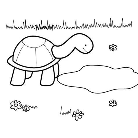 imagenes de como cuidar el agua para colorear tortuga presumida dibujo para colorear e imprimir