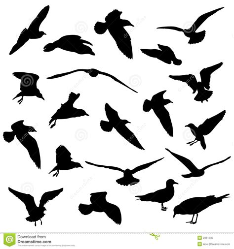 seagulls silhouettes stock vector illustration of