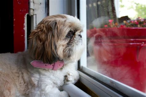 leaving puppy home alone what your pets do when you re not home let s find out