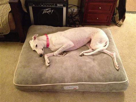 memory foam dog bed insert pin by satt miu on greyhound adoption pinterest
