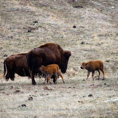 see you behind the lens: in my own words: baby tatanka