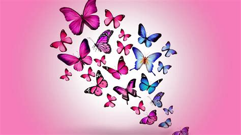 butterfly background pink butterfly backgrounds 183