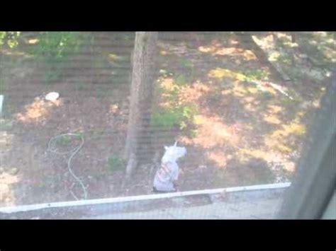 unicorn caught on tape (100% real!!!!) youtube