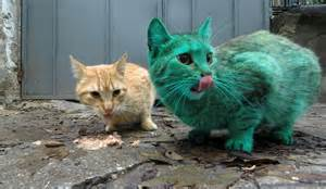The green cat of bulgaria paradoxoff planet