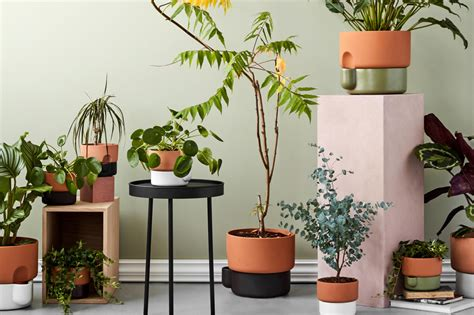 plant pots  indoor plants london evening standard