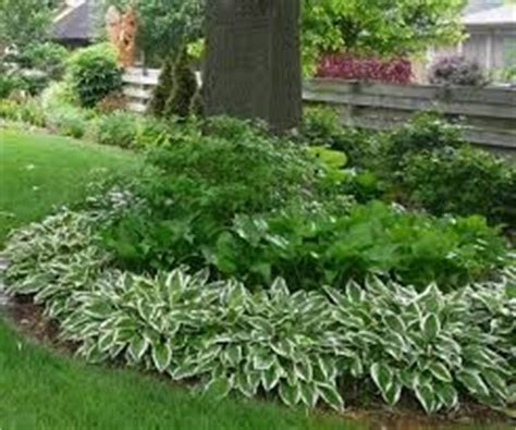 hosta flower bed search garden