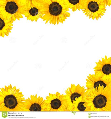 printable sunflower images free sunflower border clipart
